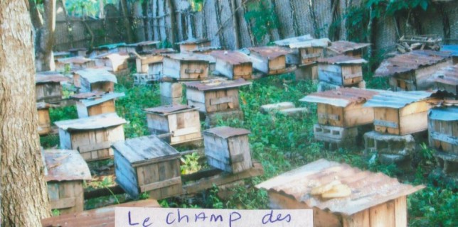 Rapport en detail du  projet des abeilles pour les 5 familles de Manester WILSON du 30/12/2015